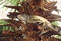 Equador park animal.jpg