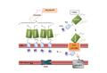 Estrés oxidatiu mitocondri.png