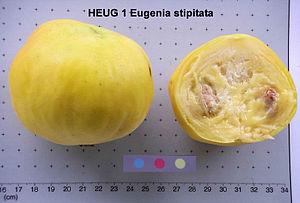 Eugenia stipitata - Fruit of Eugenia stipitata