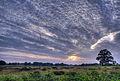 Evening Glory (5947756052).jpg