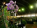 Exposição Nacional de Orquídeas de Catanduva no Colégio Nossa Senhora do Calvário - Colegião - panoramio (9).jpg