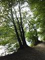 FFM Nidda Grillscher Altarm Uferweg NW 2.jpg