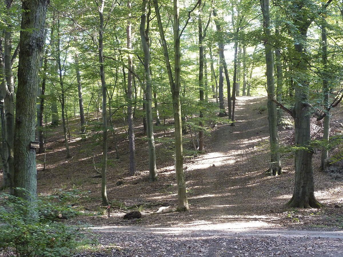Kelsterbacher Terrasse – Wikipedia
