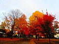 Fall Colors in Madison - panoramio (8).jpg