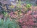 Fall colors (872dd069ae3d4d67a2e87d46a282b953).JPG