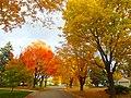 Fall in Madison - panoramio (17).jpg