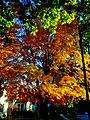 Fall in Maple Bluff - panoramio.jpg