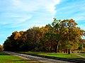 Fall in Middleton - panoramio.jpg