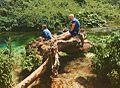 Familje duke pushuar ne trungun e nje peme te rene prane Syrit te Kalter.jpg