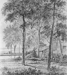 Farm with Pigs under the Trees