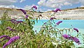 Faxe Kalkbrud - panoramio.jpg