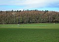 Fields and Woods - geograph.org.uk - 355502.jpg