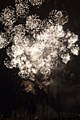 Fireworks - July 4, 2010 (4773760972).jpg