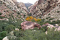 First Creek Canyon 2.jpg