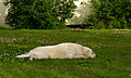 Flickr - Per Ola Wiberg ~ mostly away - A nap outdoor.jpg