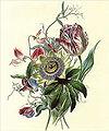 Flora's Gems04a.jpg