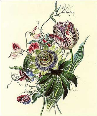 James Andrews (botanical artist) - Flora's Gems