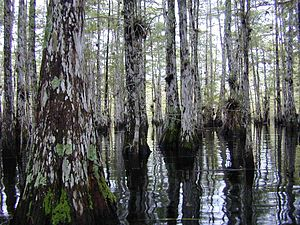 Howard T. Odum - Florida Cypress Dome in the Big Cypress National Preserve