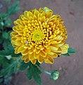 Flowers - Uncategorised Garden plants 182.JPG
