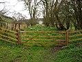 Footpath Daffodils at Fordon - geograph.org.uk - 1804246.jpg
