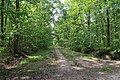 Forêt domaniale de Bois-d'Arcy 27.jpg