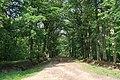 Forêt domaniale de Bois-d'Arcy 39.jpg