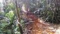 Forêt galerie de Twometa 02.jpg