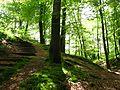 Forêtde Saint-Sever.jpg