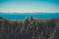 Forest&lake(byPJrvs).jpg