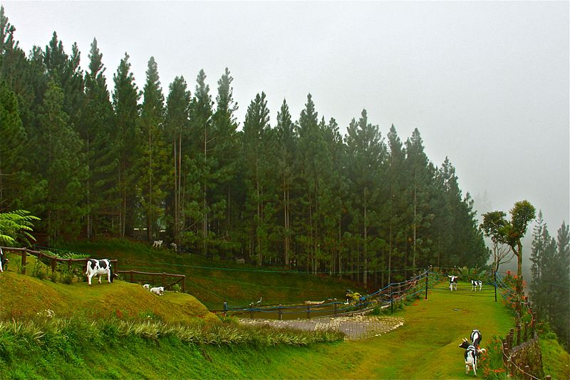 Dahilayan forest Camp, Dahilayan forest Park, Mindanao Tourist Spots,