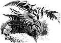 Forest Hymn pg 69b.jpg
