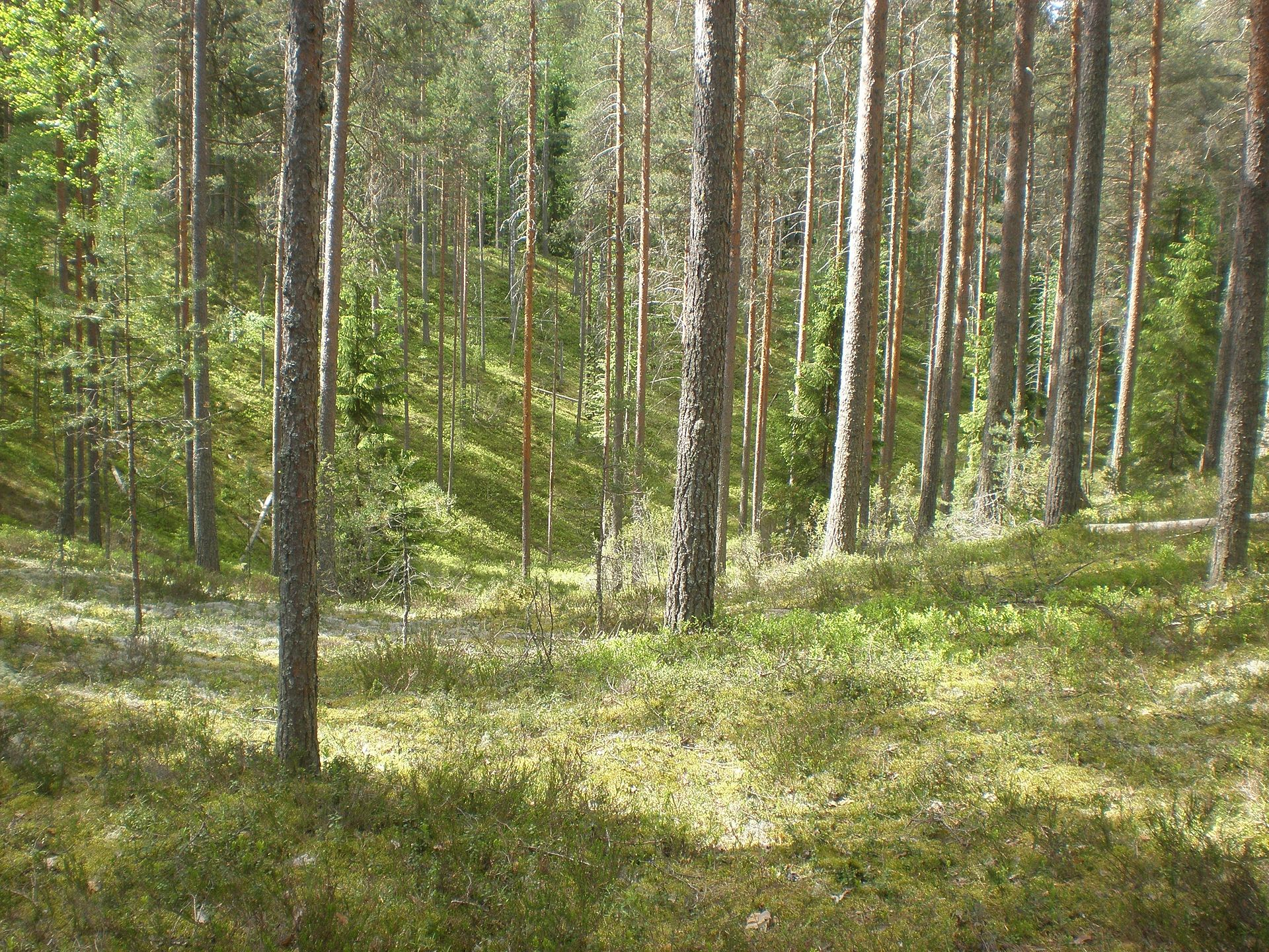 Scandinavian And Russian Taiga Wikipedia