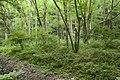 Forest in Mt.Gozen (Ibaraki) 08.jpg