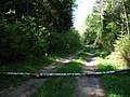 Forest road near Minsk - panoramio (1).jpg