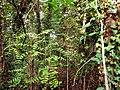 Foresta tropicale a San Bonifacio - panoramio.jpg
