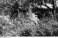 Fotothek df rp-c 0520024 Höckendorf-Beerwalde. Beerwalder Talmühle, Mauerrest.jpg