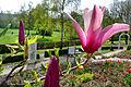 Frühling im Bad Mergentheimer Kurpark. 24.jpg