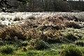 Frosty field, Widecombe - geograph.org.uk - 680587.jpg