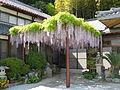 Fudoji (Gose, Nara) fuji.jpg