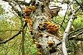 Fungus, Clandeboye Wood (16) - geograph.org.uk - 968490.jpg