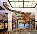 Futabasaurus Suzuki - Joy of Museums - National Museum of Nature and Science, Tokyo.jpg