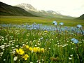 GB Deosai National Park -7.jpg