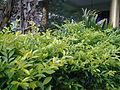 Garden at saraswathi illam,palavangudijpg 08.jpg