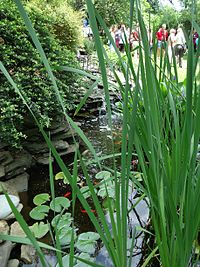 Garden party with fish in pond and reeds.jpg