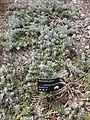 Gardenology.org-IMG 8355 rbgc10dec.jpg