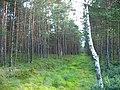 Garkalnes novads, Latvia - panoramio - SkyDreamerDB (25).jpg