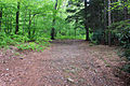 Gfp-pennsylvania-promised-land-state-park-hiking-trail.jpg