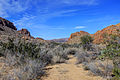 Gfp-texas-big-bend-national-park-shrubland-and-canyons.jpg