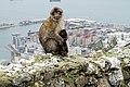 Gibraltar - panoramio - Jos Dierickx (1).jpg