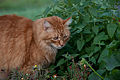 Gillie and the catnip (7382639870).jpg